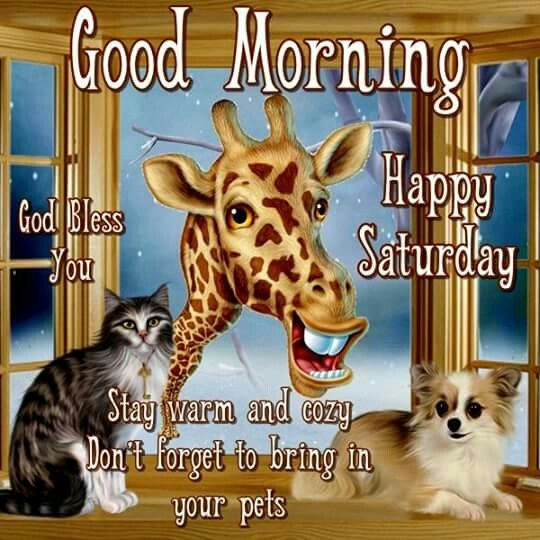 Cute Animals Good Morning Saturday Quote Pictures, Photos ...