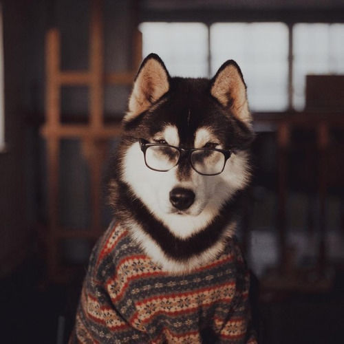 Reading Husky Pictures Photos And Images For Facebook