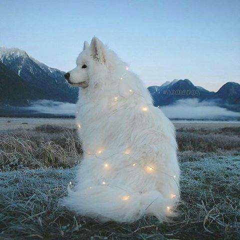 Beautiful Dog With Twinkle Lights Pictures Photos And