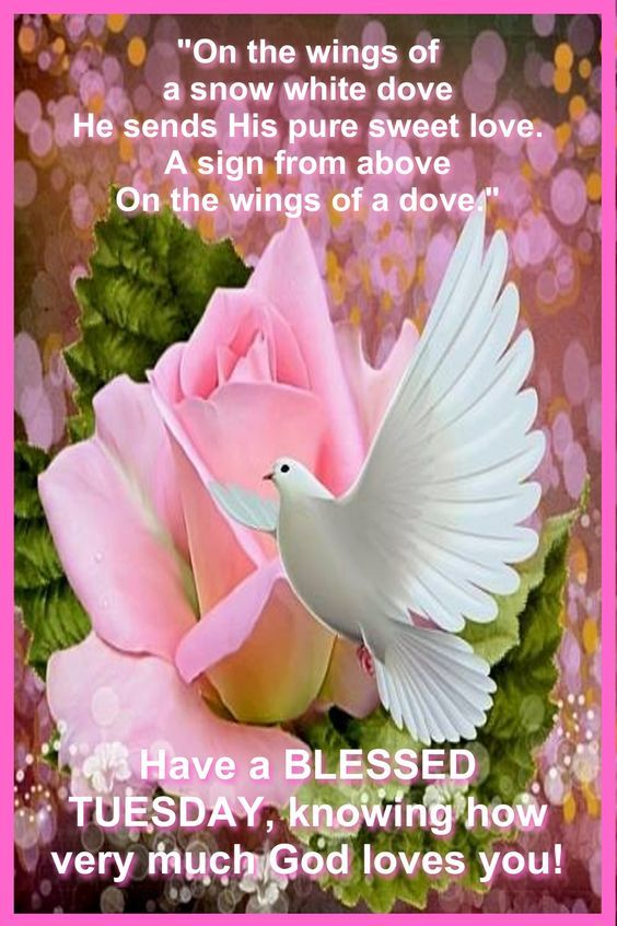 Floral Dove Blessed Tuesday Quote Pictures Photos And
