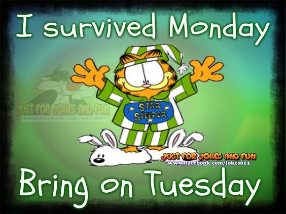 Image result for i survived monday bring on tuesday