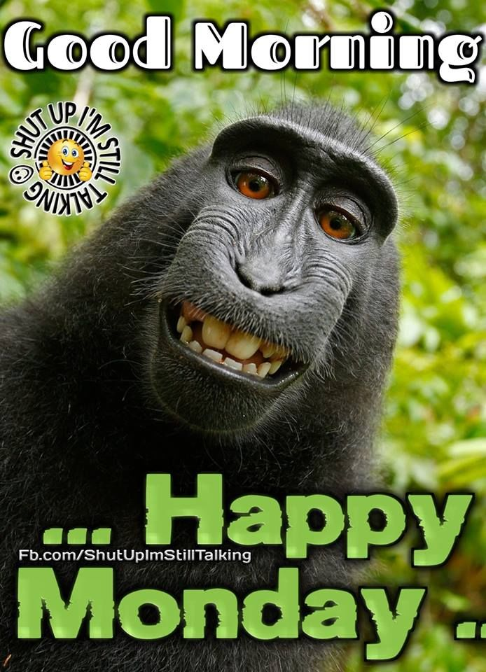 Monkey Good Morning Happy Monday Pictures Photos And