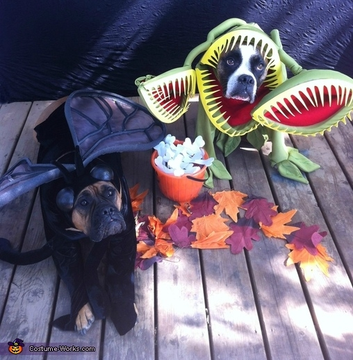 Venus Fly Trap And Fly Dog Costumes Pictures Photos And