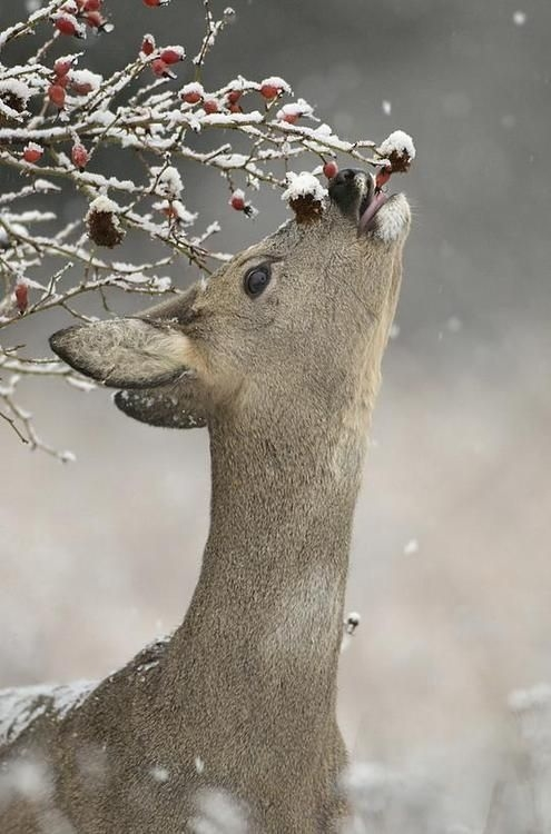 https://i1.wp.com/www.lovethispic.com/uploaded_images/51025-Winter-Deer.jpg