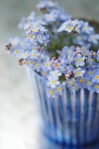 Download the perfect good morning flower pictures. Tiny Blue Flowers Pictures, Photos, and Images for
