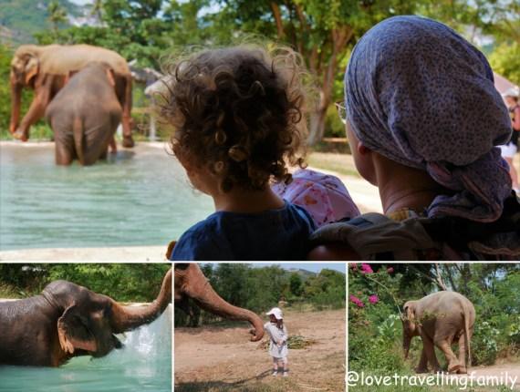Gdzie zobaczyć słonie w Tajlandii. Sanktuaria i rezerwaty słoni Koh Samui Elephant Sanctuary