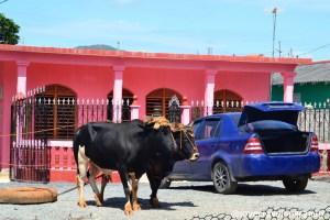 Oxen vs car, Vinales, Cuba