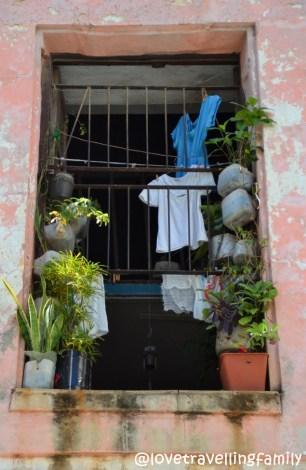 window Havana Cuba