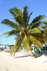 Beach in Cuba, Playa Larga
