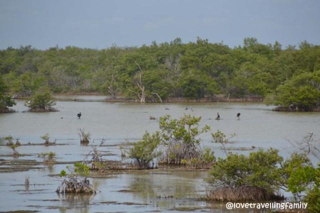 Laguna de las Salinas, Cuba