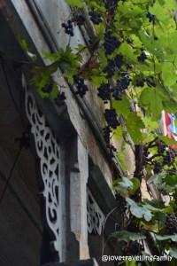 Grapes, Old Town, Tbilisi, Georgia