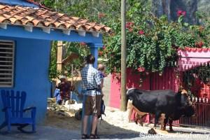 Viñales, Cuba, Love travelling family