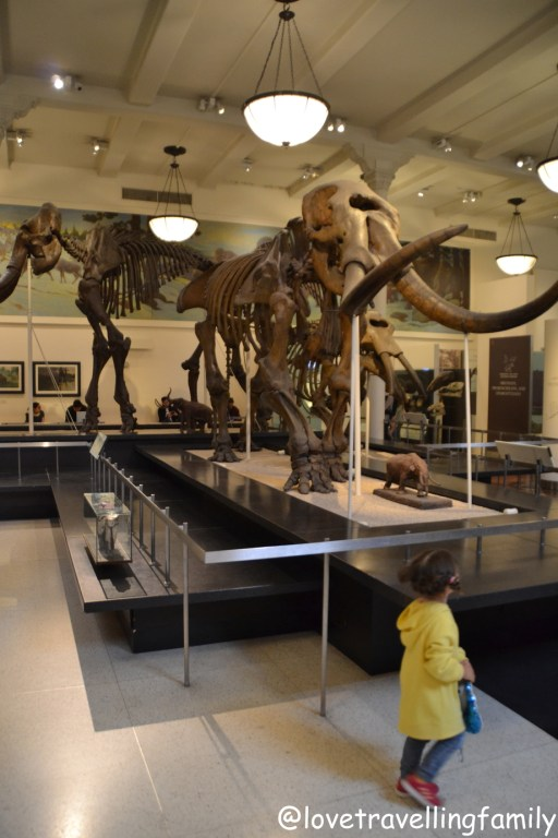 American Museum of Natural History Love travelling family