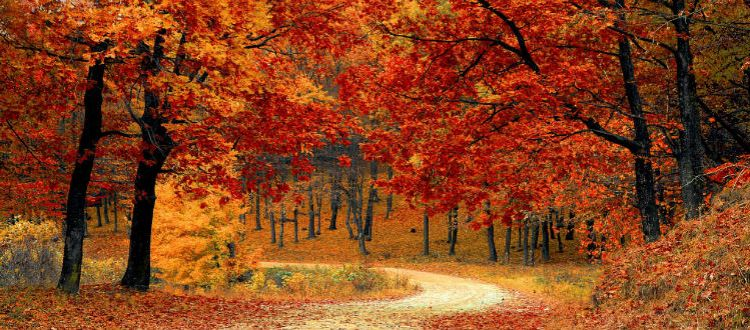 Fall foliage on a country road.