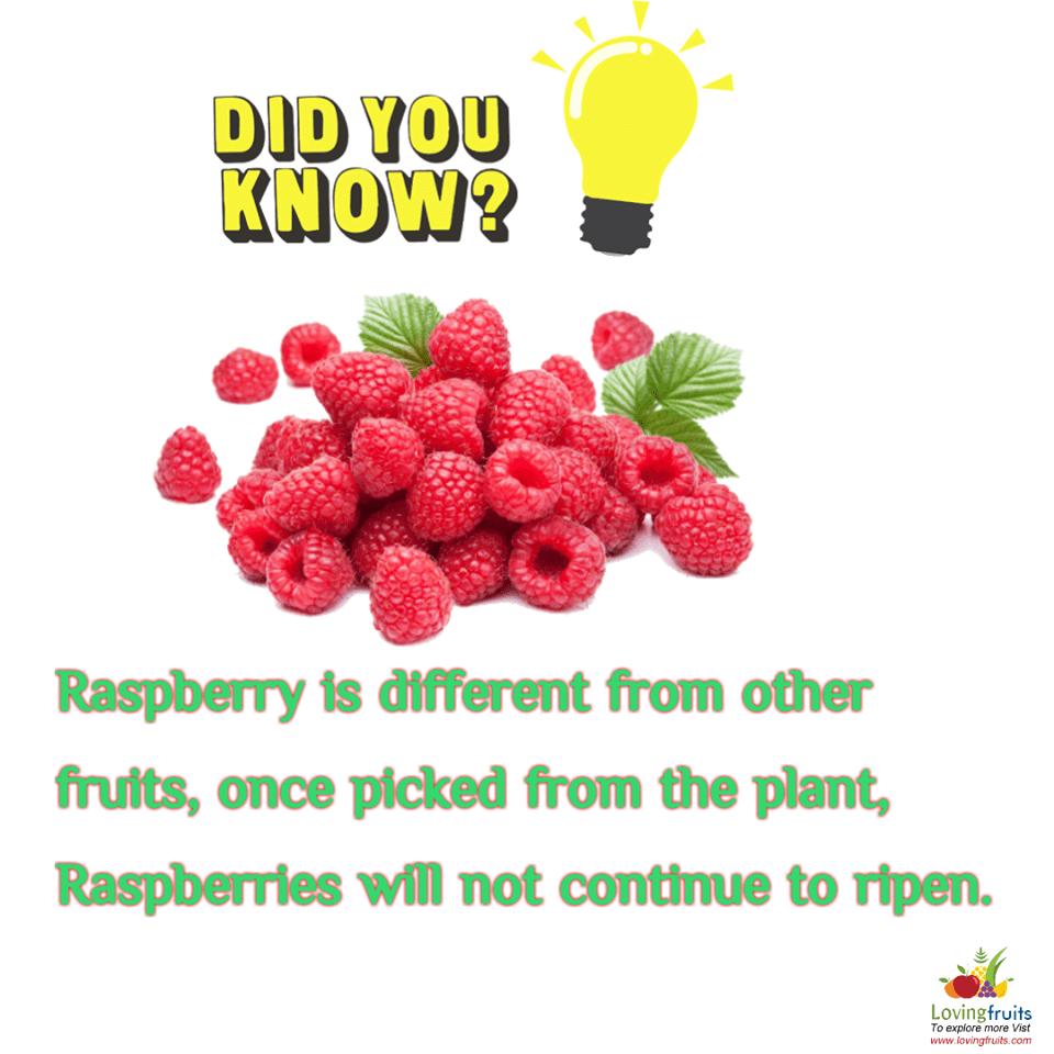 red raspberry fun facts
