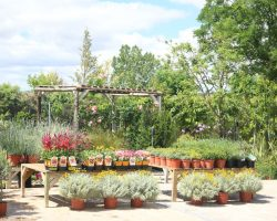 Talleres Florales Loving lavanda