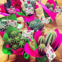 Cactus de regalos para invitados
