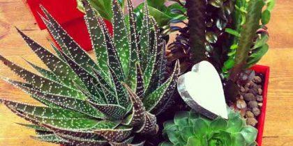 Terrario Cactus Loving Lavanda