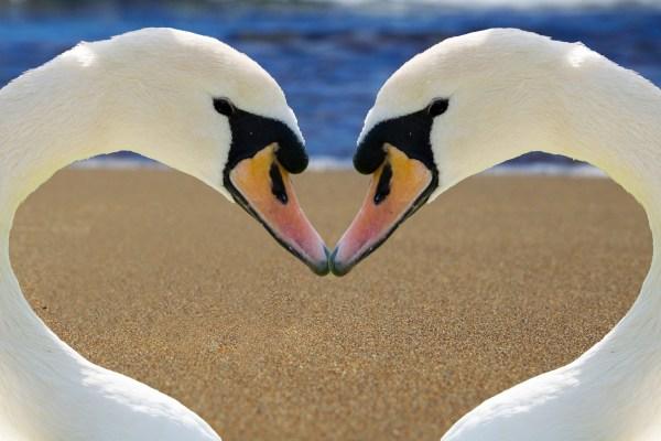 Find Love Beyond 50