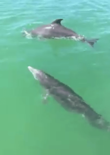 dolphins sneads ferry