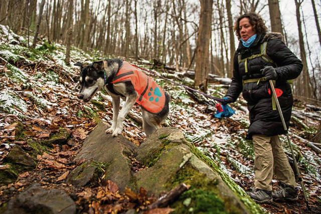 Sasha, a one-year-old Husky mix, scrambles over some rocks while hiking with her owner, Angela Pease, of Derry, on Friday<ins>,</ins><ins> Nov. 29, 2019</ins> on the Grove Run Hiking Trail at Linn Run State Park. About 23 hikers signed up for an opt-outside hiking meet-up group on Black Friday at Linn Run State Park. The opt-outside is part of an REI initiative encouraging people to get outdoors instead of shopping on Black Friday. REI is one of the few retail stores that remains closed on Black Friday.