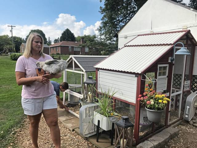 Kristin Kuhns, in foreground, and son, Mick, 11, remove two of their 20 chickens from coops on Wednesday<ins>,</ins><ins> Aug. 12, 2020,</ins> in the backyard of their home in Unity Township's Lawson Heights.