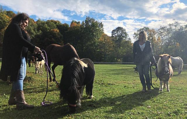 Rachelle Rizzo of Pleasant Valley Rescue Ranch and Hope Remanes founder Nicole Cermak work with Hannah and Sven, two miniature paints, on Thursday.