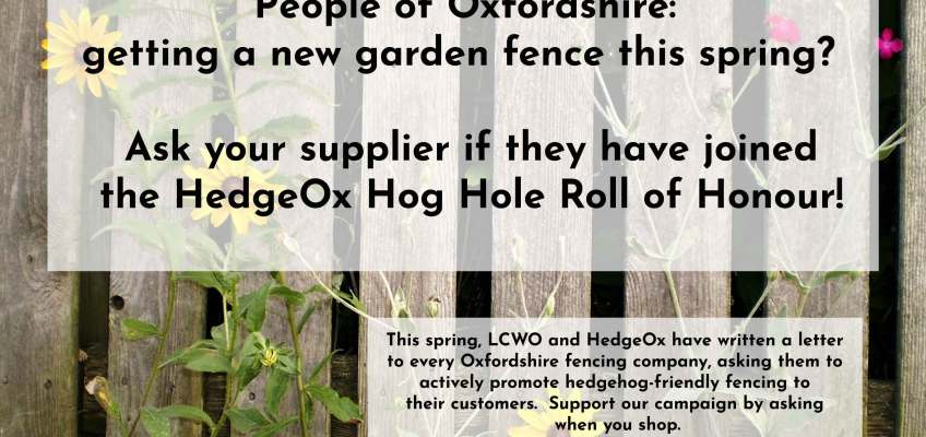 Launching the HedgeOx Hog Hole Roll of Honour!