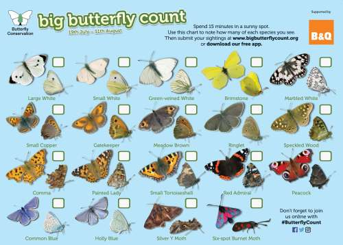 Big Butterfly Count [Butterfly Conservation event – takes 15 minutes to do!]