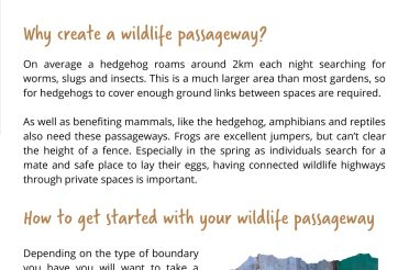 Get active with these new Naturehood 'how to' guides, whatever is happening outside