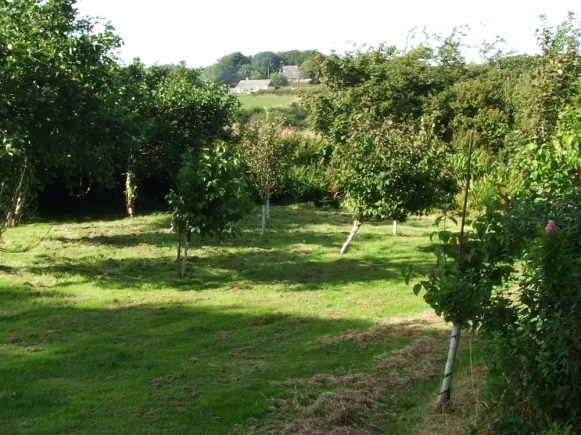 pic 10 surrounding trees and countryside