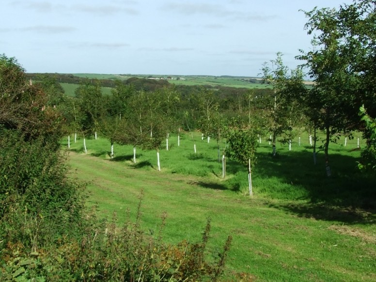 pic 12 surrounding trees and countryside