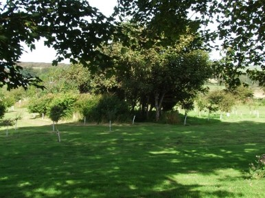 pic 2 surrounding trees and countryside