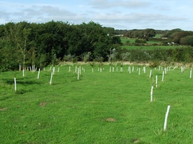 pic 4 surrounding trees and countryside