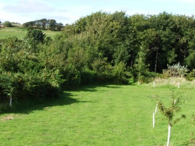 pic 5 surrounding trees and countryside