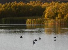 Bortons Pond (2)