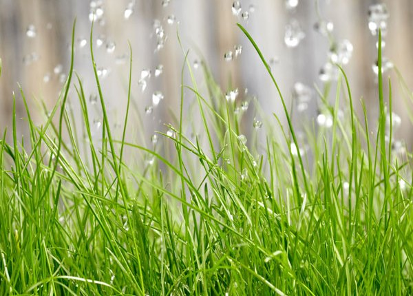 Which Rain Sensor is Right for your Home