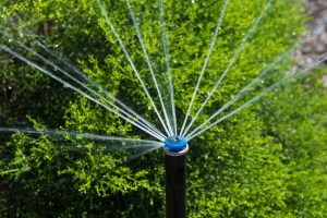 Microirrigation head installed by our El Dorado Hills sprinkler repair team