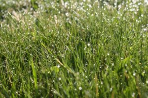 mowing grass after a storm with advice from Low Flow Sprinkler Pros