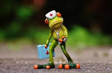 frog-1672942_640