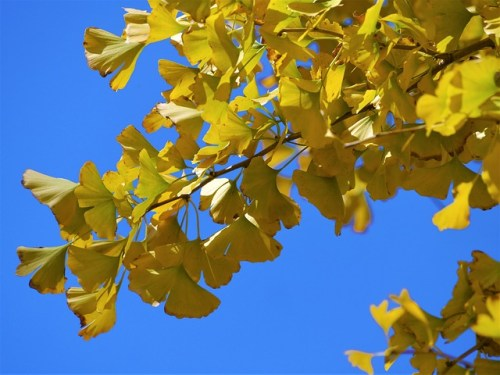 yellow-leaves-1874833_640