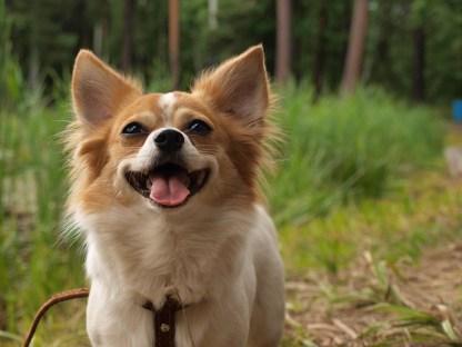 dog-2464341_640