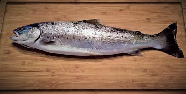 fish-2201050_640