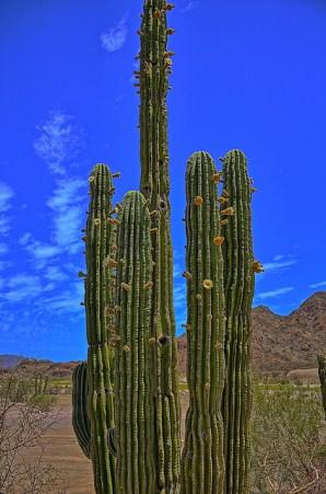 feature_big_cactus