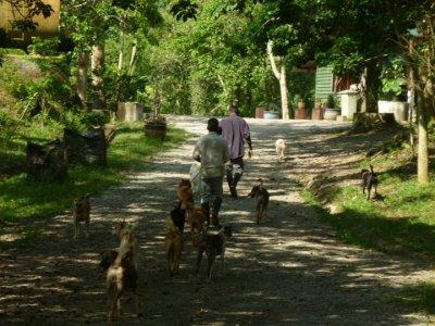Walking The Dogs | Credit: Bentong Farm Sanctuary