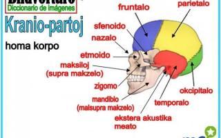 Esperanto, Developing Better Scientists