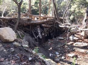 Tree Dam Jan 2019