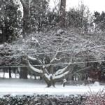 HILLCREST APPLE TREE
