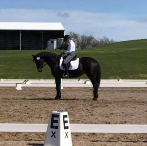 dressage - riding - horses - Hanoverian - horse shows -