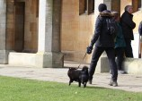 Dog walking with owner through the grounds